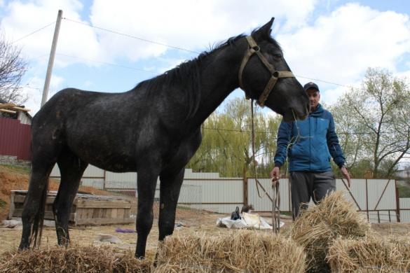 В Умані власник коня запевняє, що не знущався над твариною