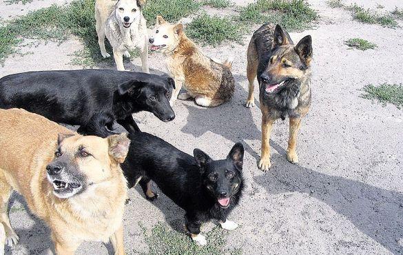 Безпритульні собаки дошкуляють черкащанам (ВІДЕО)