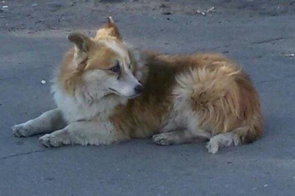 Cтало відомо, куди із середмістя Черкас зникла собака-