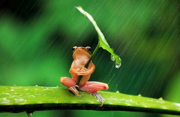 На Черкащину очікує незначне похолодання та дощі