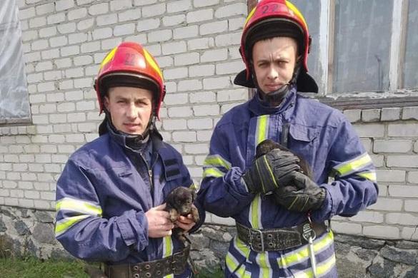На Черкащині із глибокої ями рятували цуценят