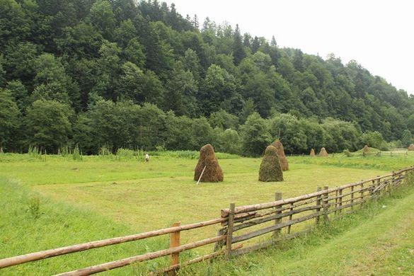 У Держгеокадастрі Черкащини розповіли, скільки тисяч гектарів землі видали учасникам АТО