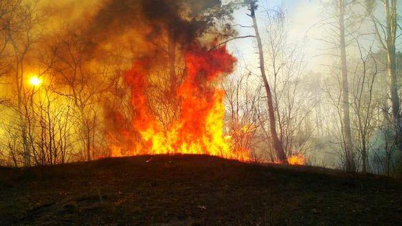 Карантин у дії: під Черкасами відпочивальники підпалили ліс та втекли (ВІДЕО)