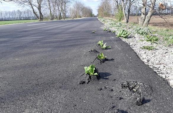 Крізь новий асфальт на Черкащині проросла трава (ФОТО)
