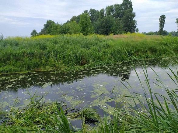 Через злив відходів у річці на Черкащині загинула вся риба (ФОТО)