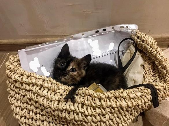 Нереальна жорстокість: черкащани запхали кошеня у каністру і здали на металолом (ФОТО)