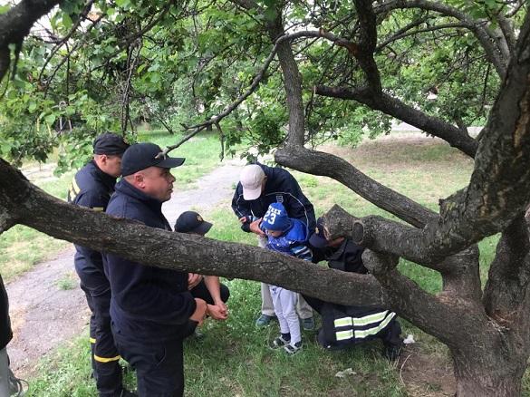 У Черкасах з дерева рятували хлопчика (ВІДЕО)