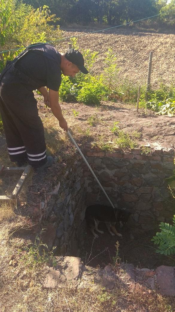 У Черкаській області рятували чотирилапого, який впав у яму (ФОТО)