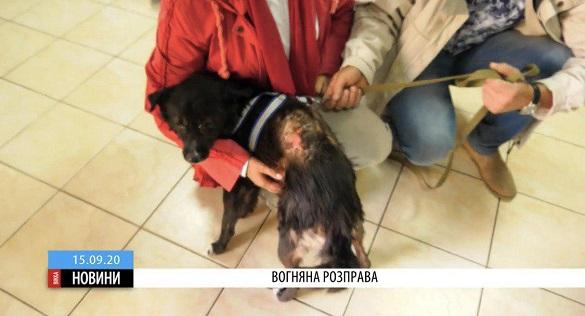 Жахливе знущання: в Черкасах невідомі підпалили собаку (ВІДЕО)