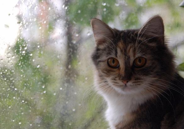 Черкаські синоптики прогнозують дощі на цей тиждень