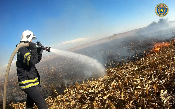 Близько години в Черкасах гасили пожежу на кукурудзяному полі (ВІДЕО)