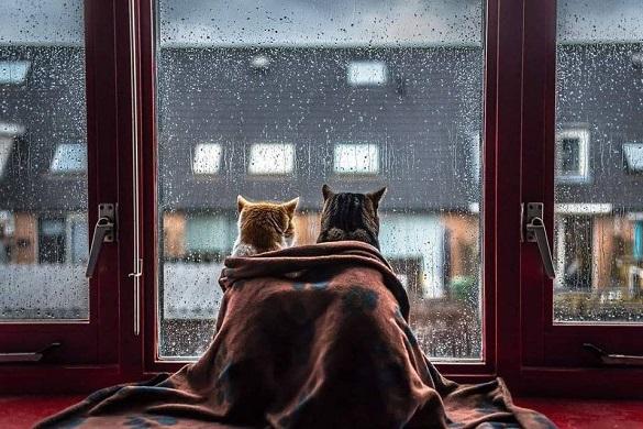 Завтра на Черкащині очікують похолодання та грозові дощі
