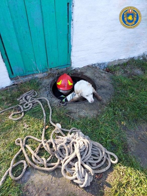 Із вигрібної ями на Черкащині врятували собаку (ФОТО)