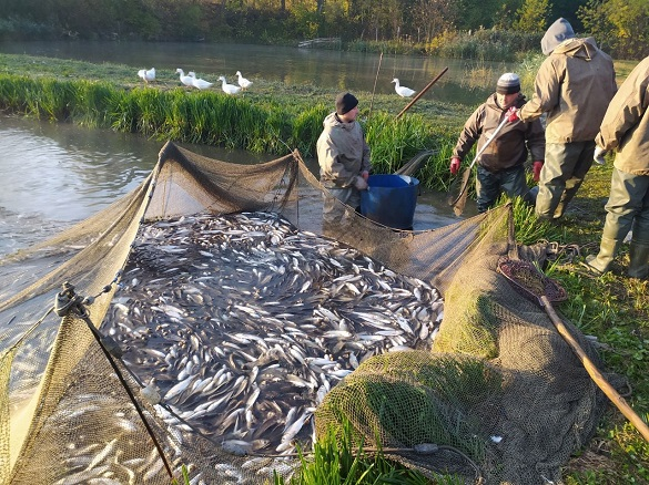 На Черкащині зарибили річку Дніпро (ФОТО)