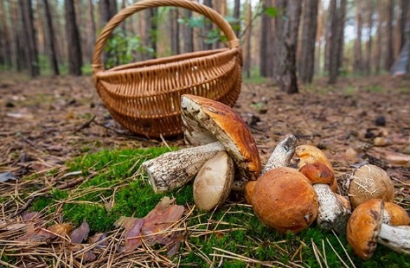 У Черкаській області підліток отруївся грибами