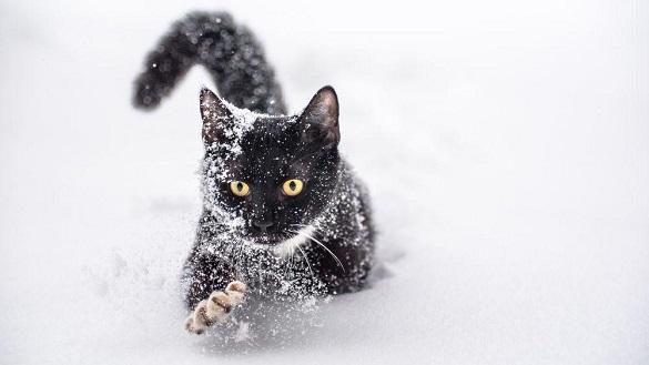 На вихідних у Черкаській області прогнозують невеликий сніг та дощ, а на дорогах - ожеледицю