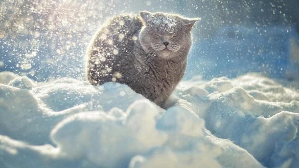 Вихідними на Черкащині прогнозують невеликий сніг