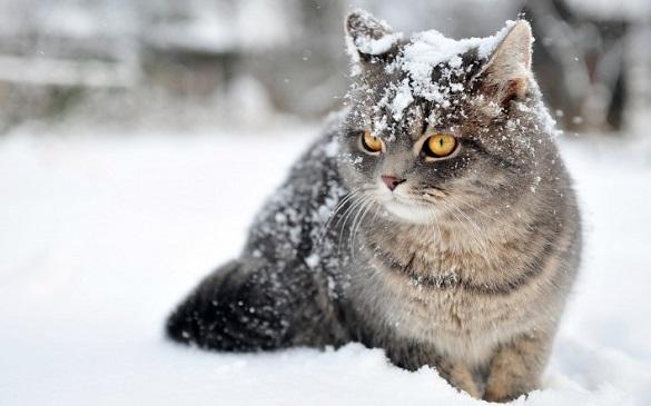Черкаські синоптики розповіли, як довго сніжитиме