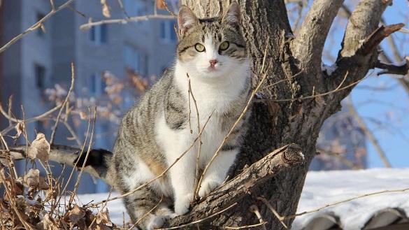 У Черкасах рятувальники дістали з дерева кота