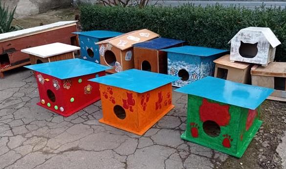 Хатинка для друга: на Черкащині діти створили домівки для безпритульних тварин