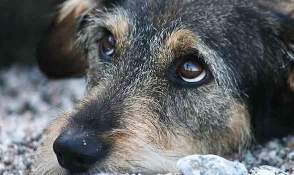 На Черкащині судитимуть чоловіка, який скалічив безпритульного собаку