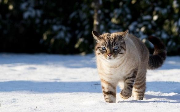 Завтра на Черкащині погода буде морозною, але без снігу