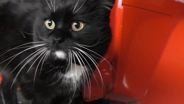 Вусатий талісман: на Черкащині в рятувальників працює кіт (ВІДЕО)