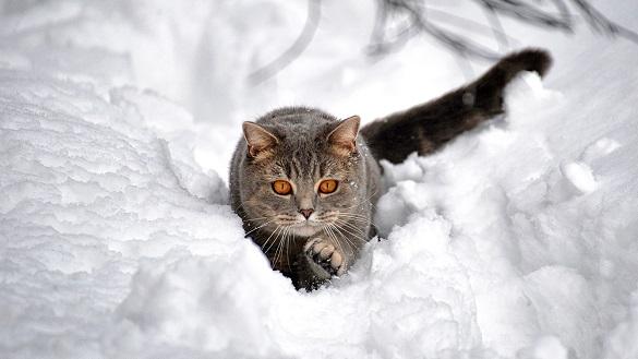 Черкаські синоптики розповіли, як довго в області буде сніжити