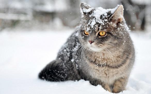 До завтра на Черкащині сніжитиме