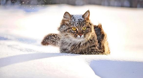 Хуртовина, снігові замети, ожеледиця, морози та сильний вітер: яка погода на Черкащині буде цього тижня