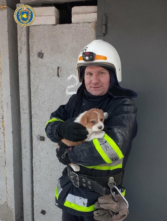 Застрягли між гаражами: на Черкащині врятували двох цуценят