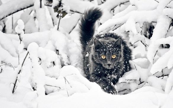 Синоптики розповіли, чи покращиться найближчим часом погода на Черкащині