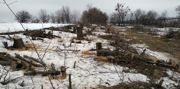 Збитки на понад мільйон гривень: на Черкащині виявили незаконну вирубку дерев