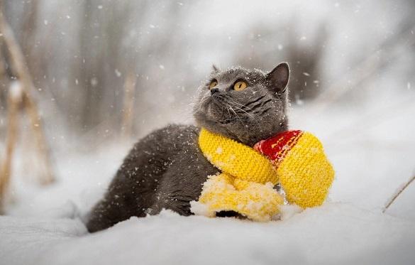 У Черкасах температура на поверхні снігу зменшилась до -30 градусів