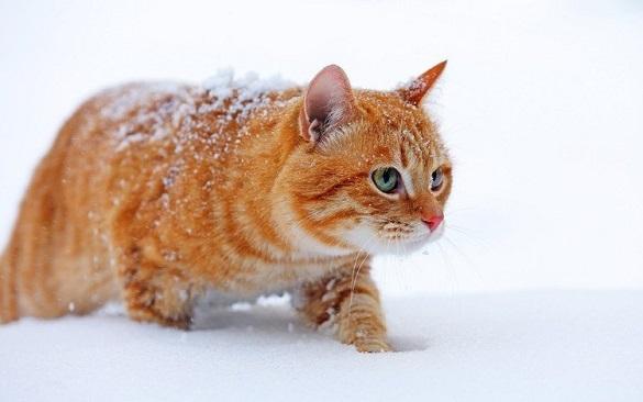 Синоптики розповіли, яка погода буде на вихідних у Черкаській області