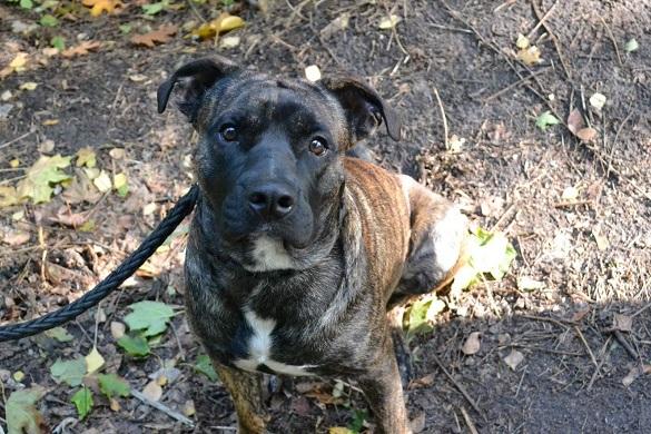 Черкащан просять допомогти знайти пса Барі (ФОТО)