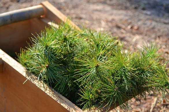 На Черкащині вже висадили майже 200 гектарів лісів (ФОТО)