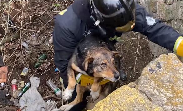 На Черкащині врятували собаку, яка впала у чотириметрову яму (ВІДЕО)
