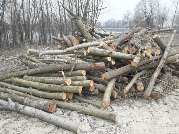 У Черкаській області невідомі вирубали понад 300 дерев