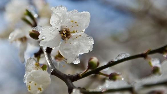 Морози в квітні: завтра на Черкащині прогнозують дощі, а потім похолодання