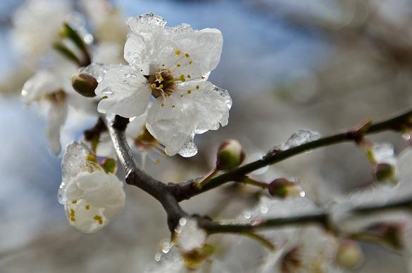 Сьогодні до 7 сантиметрів снігу, а вже найближчими ночами в Черкаській області прогнозують сильні заморозки