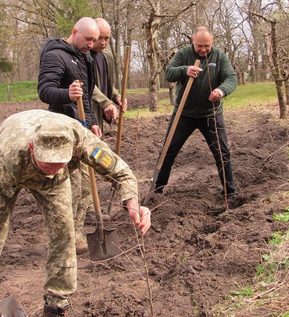 Яблуні легендарного сорту: на Черкащині біля музею родини Симиренків висадили сад