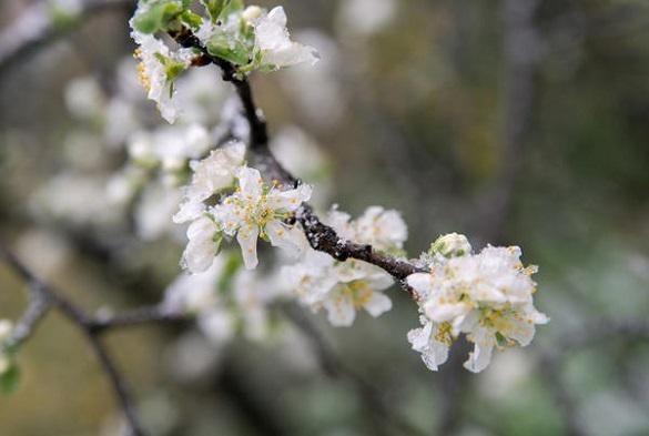 У Черкаській області знову прогнозують сильні заморозки