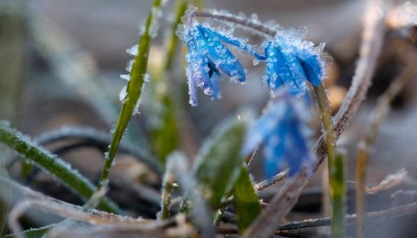 Найближчими днями на Черкащині очікують заморозки та короткочасні дощі