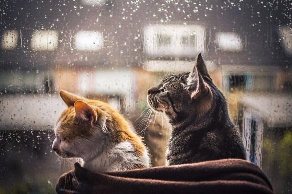 Найближчим часом у Черкаській області прогнозують дощі та похолодання