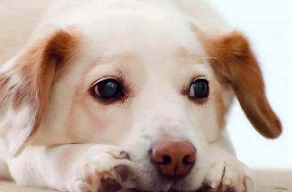 У Черкаській області з  20-метрового колодязя витягли собаку