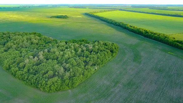 Як продати землю вигідно та захистити себе від недобросовісних покупців? В Україні створили онлайн-помічника LandInvest для землевласників