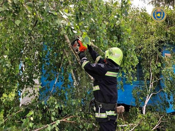 На Черкащині через негоду дерево впало на відділення поштового зв'язку