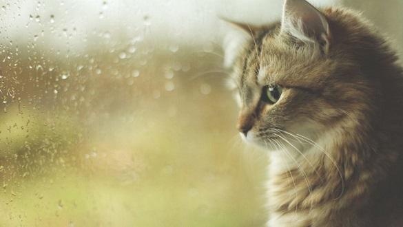 Синоптики попереджають про зміну погоди, насуваються дощі й грози