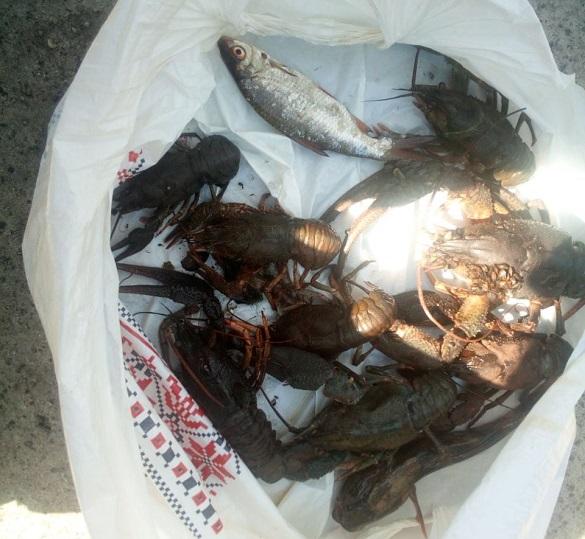 Вилов раків та риби в нерестовий період: у Каневі декілька разів за день виявили браконьєрів (ФОТО)